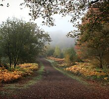 Misty Road of Autumn by SeeOneSoul