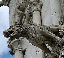 Gargoyle, Amiens cathedral, France by buttonpresser