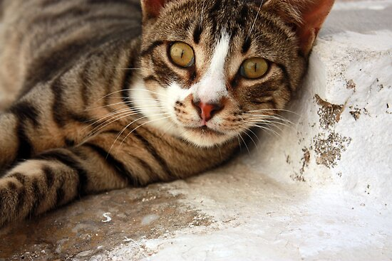 ... a particularly friendly Greek cat :) ... by SeeOneSoul