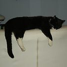 """Cat """"Kazimierz""""  by JerzyS"""