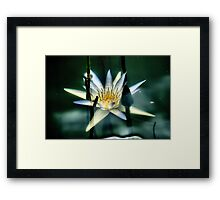 Underwater Lily Framed Print