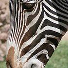 Zebra up Close... by RichImage