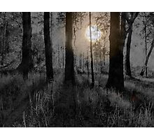 SCAREY FOREST IN THE NIGHT Photographic Print