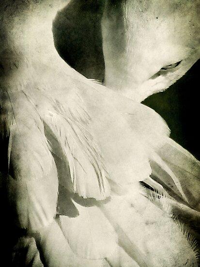 Flock by Andrew Paranavitana