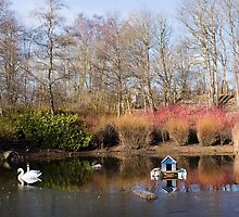 A Winter's Pond by Lynne Morris