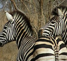 ZZZEbras' by IngridSonja