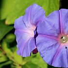 Flowers On The Vine by reflector