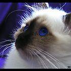 Saffire Eyes by bebas