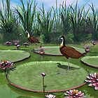 African Jacana by Walter Colvin