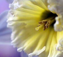 pastel by NEmens