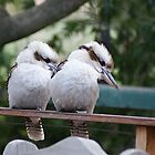 Kookaburra Sits On the RedGum Post Merry Merry King of the Bush is He by Chris Kiely