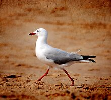 Gull by Julie Thomas