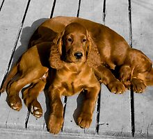 Applegrove Puppies by Geoff Hunter