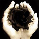 Black Beauty by bnispel22