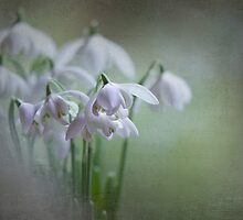Spring Arrival by Jacky Parker
