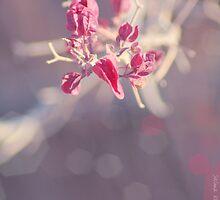 Winter Pink by SalmaAssal