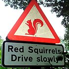 Squirrel racers! by amylw1