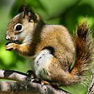 Cute Squirrel by Teresa Zieba