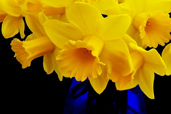 Daffodils by Susie Peek