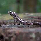 Lizard on a Stump by Matthew Sims
