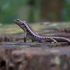 Lizard on a Stump by Matthew Sims