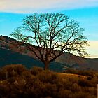 Beautiful Tree in Diablo Canyon by XanthicAmber