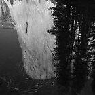 El Capitan in the Merced River - Yosemite NP by Aaron Minnick