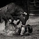 Noooo Bull by Annette Blattman
