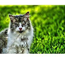 The Love Cats Photographic Print