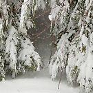 snow woods by Roslyn Lunetta