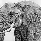 Elephant portrait by bnispel22