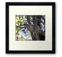 Princess ii Framed Print