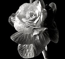 Ornamental Kale in Black and White by Endre
