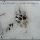 Pawprints by Catherine  Howell
