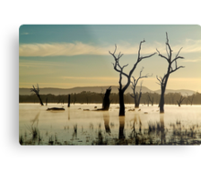 Dead Wood in the Morning Mist,Lake Fyans, Grampians Metal Print