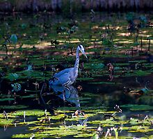 Heron Reflected by Liberty Benedict