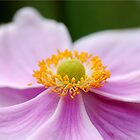Anemone by Marilyn O'Loughlin