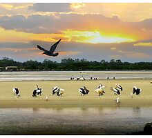 Forster Tuncurry Calendar  by kelliejane