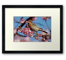 Would You Care For a Blossom? Framed Print