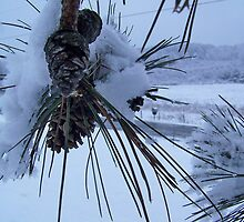 Pine bough on a snowy day by debkd