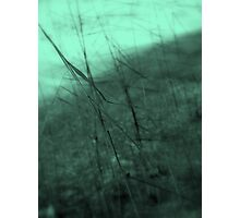 Through the Wind ©  Photographic Print