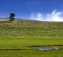 Scenic landscape by snehit