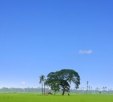 Single tree by snehit