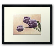 Painted Tulips Framed Print