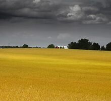 Wheat farm by snehit