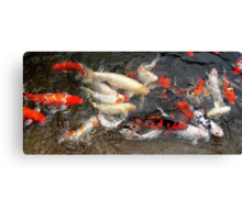 Koi at Houston Zoo Canvas Print