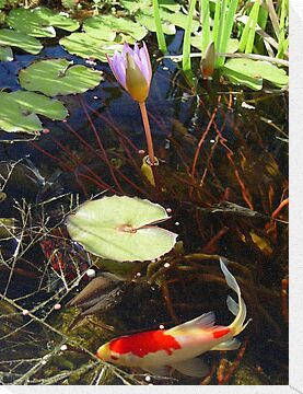 Koi and Waterlily by May Lattanzio