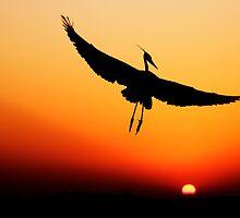 Flight by Janet Fikar