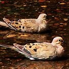 Peace Doves by shutterbug2010