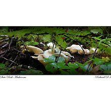 Card: Mushrooms - Yuck? by USGolfers